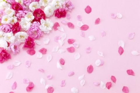 白とピンクの花と花びら