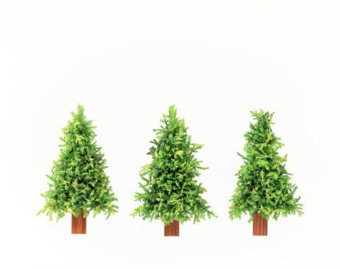 グリーンの針葉樹