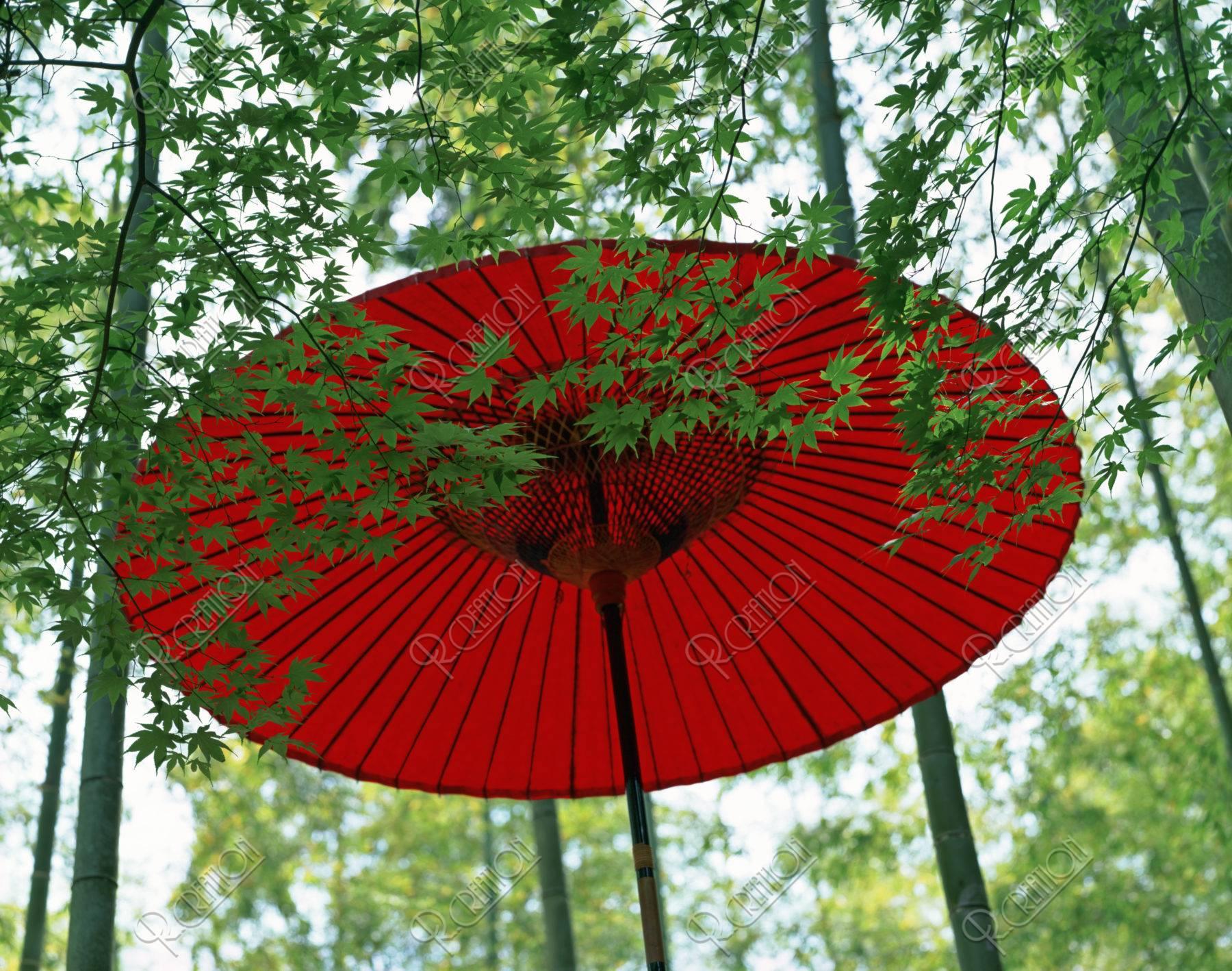 嵯峨竹林と紅傘
