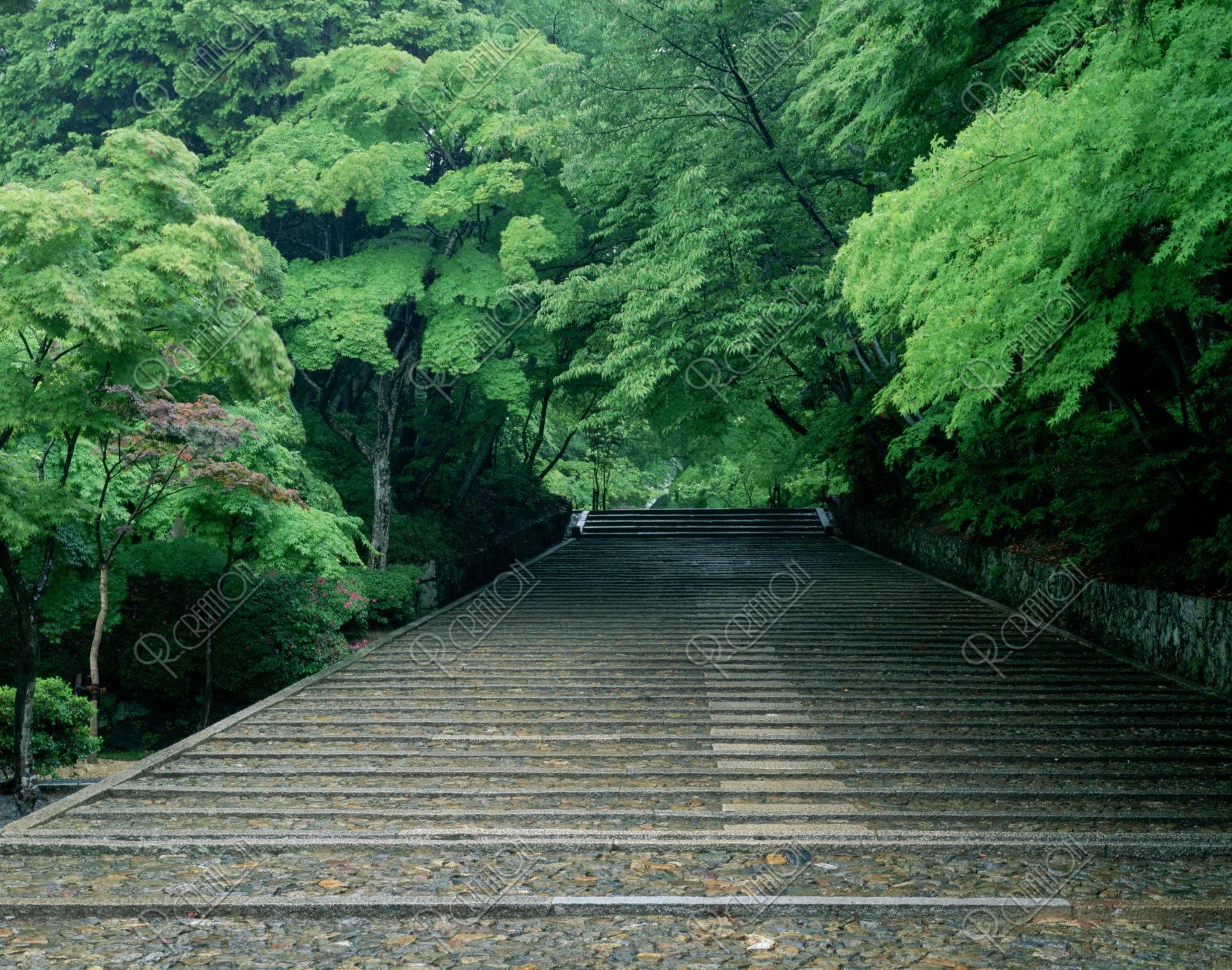 新緑の光明寺参道