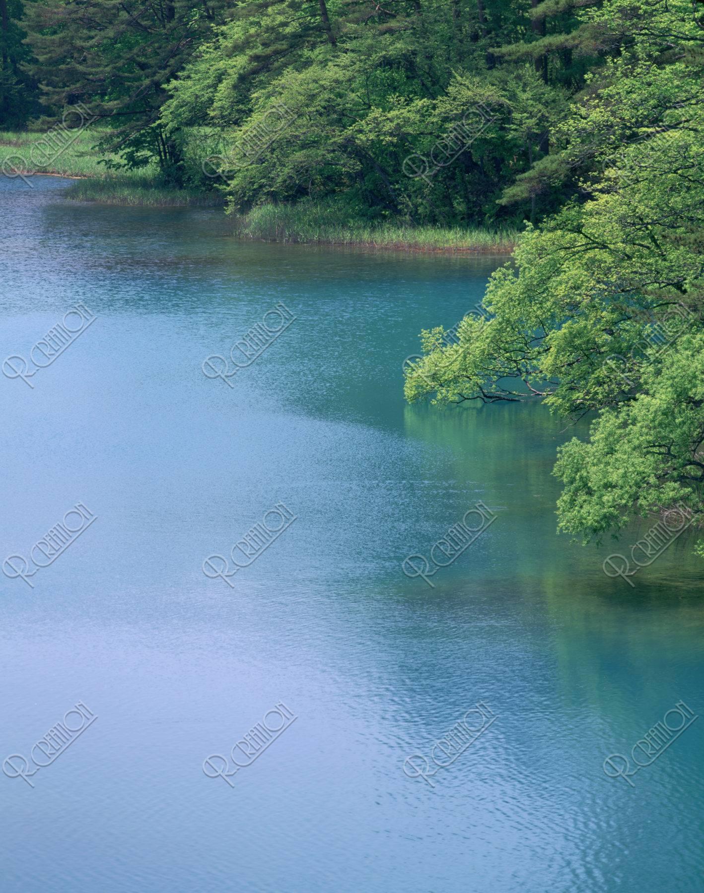 新緑の裏磐梯 毘沙門沼