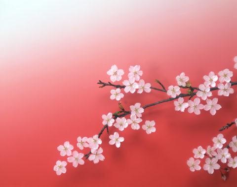桜の枝のイメージ