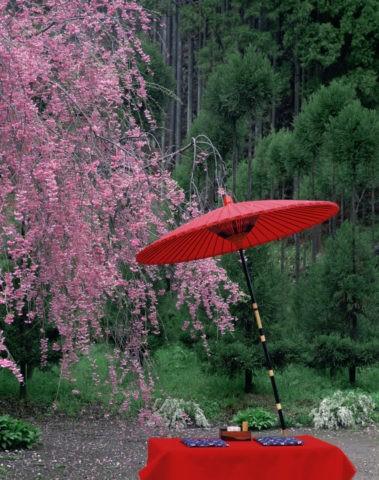 北山 紅枝垂と紅傘