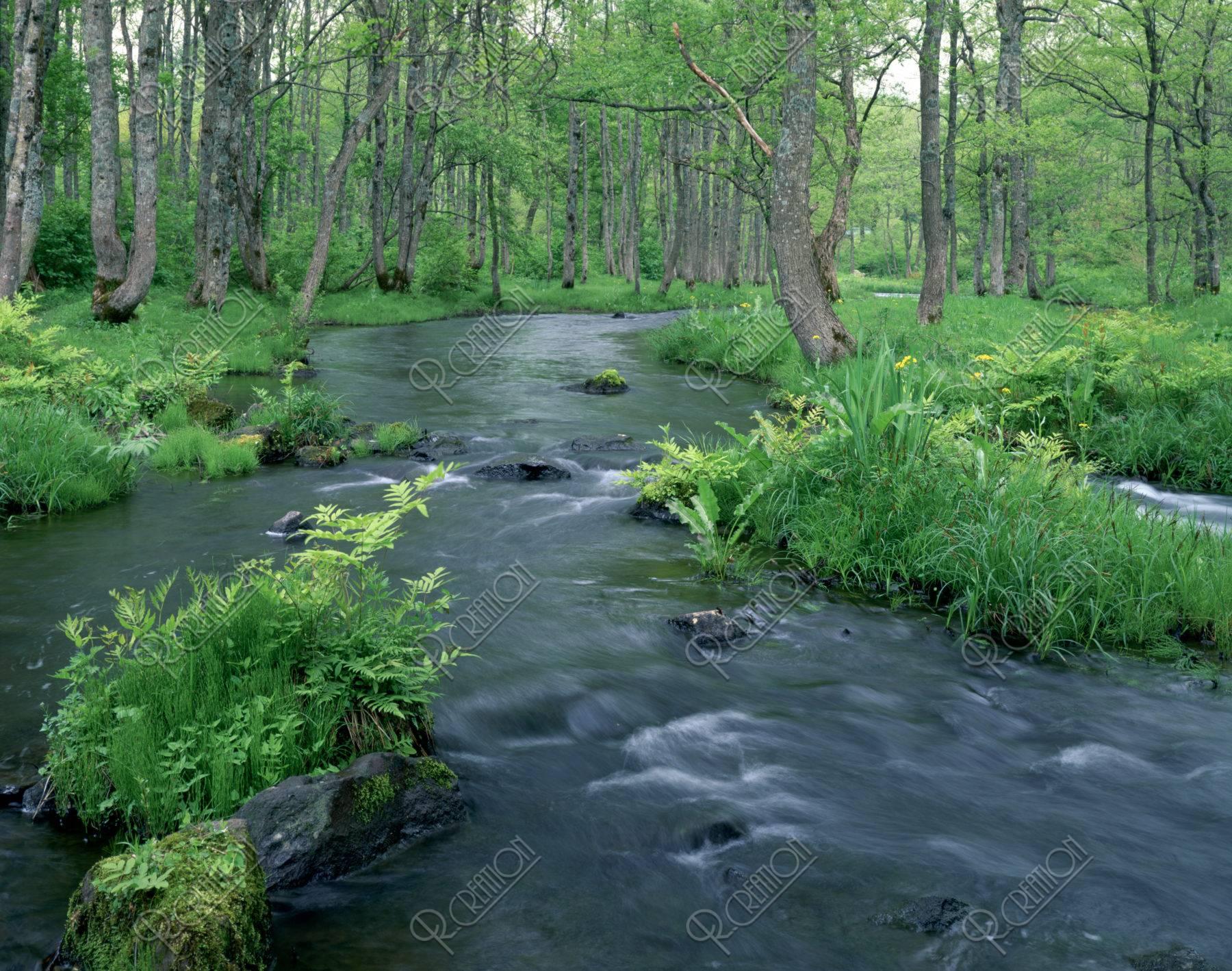 林の中の流れ