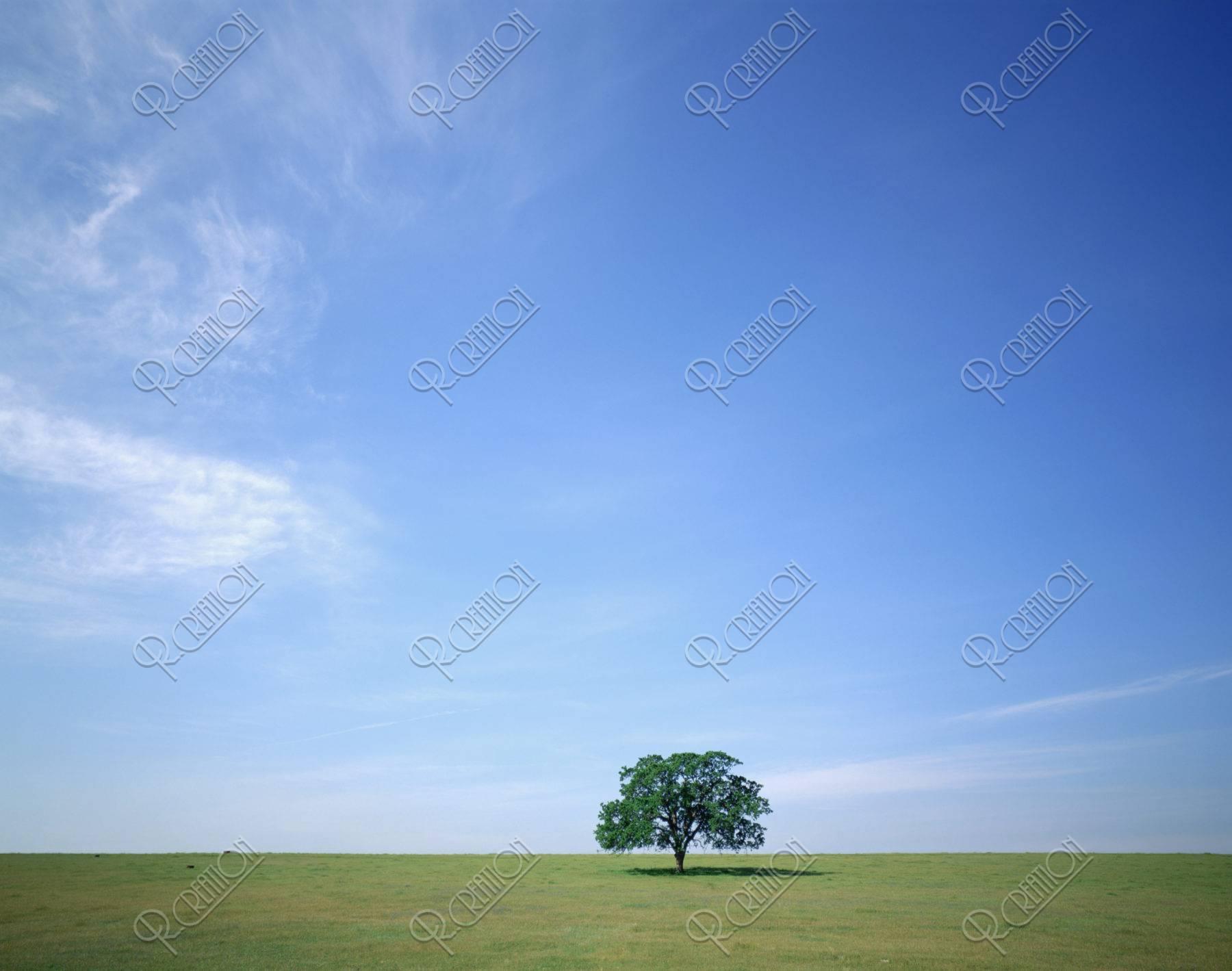 草原と樹 カルフォルニア北部
