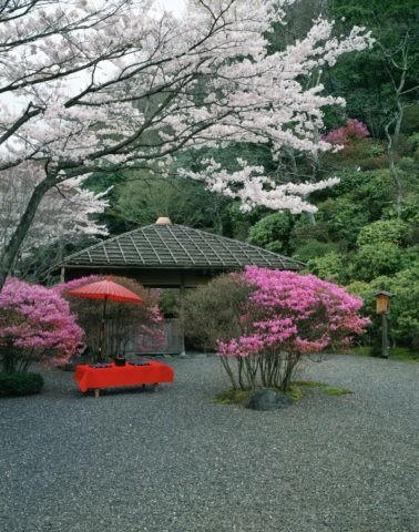 白龍園と桜