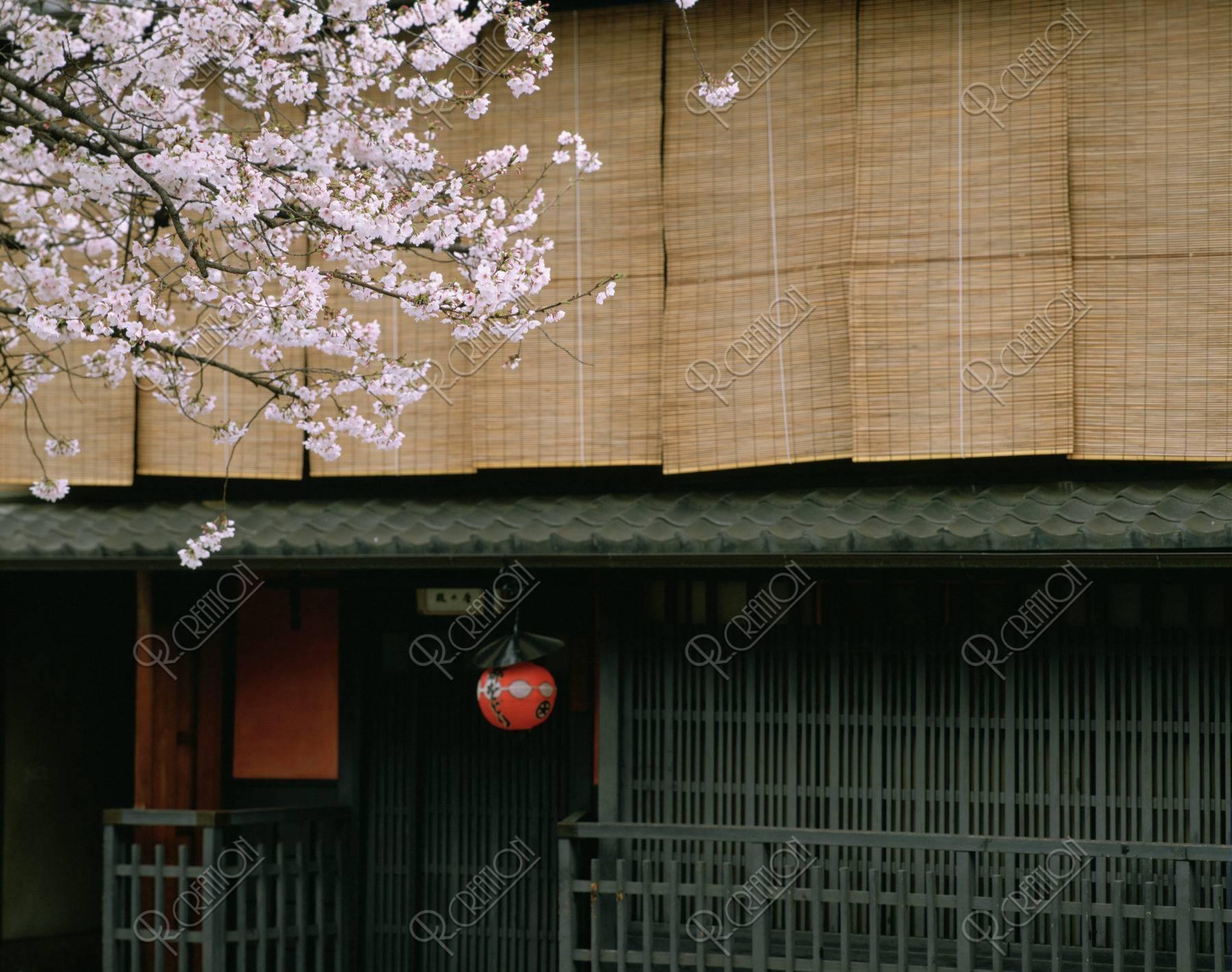 祇園の町家と桜