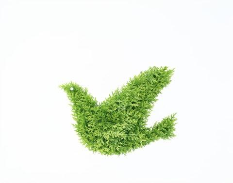 グリーンのハト