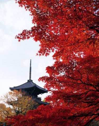 秋の真如堂三重塔