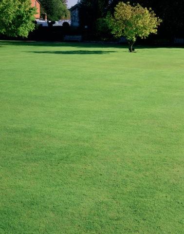 ニュープレイスガーデン芝生