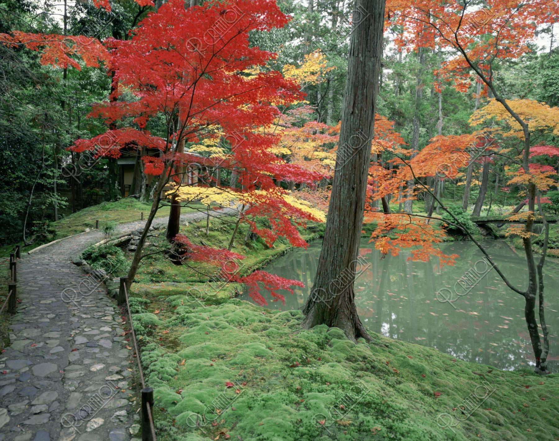石だたみの道と紅葉の西芳寺