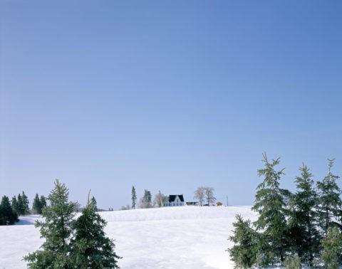 針葉樹と雪原の家