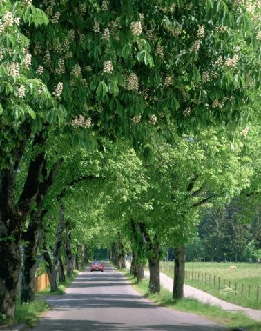 フッセンの並木道 ドイツ