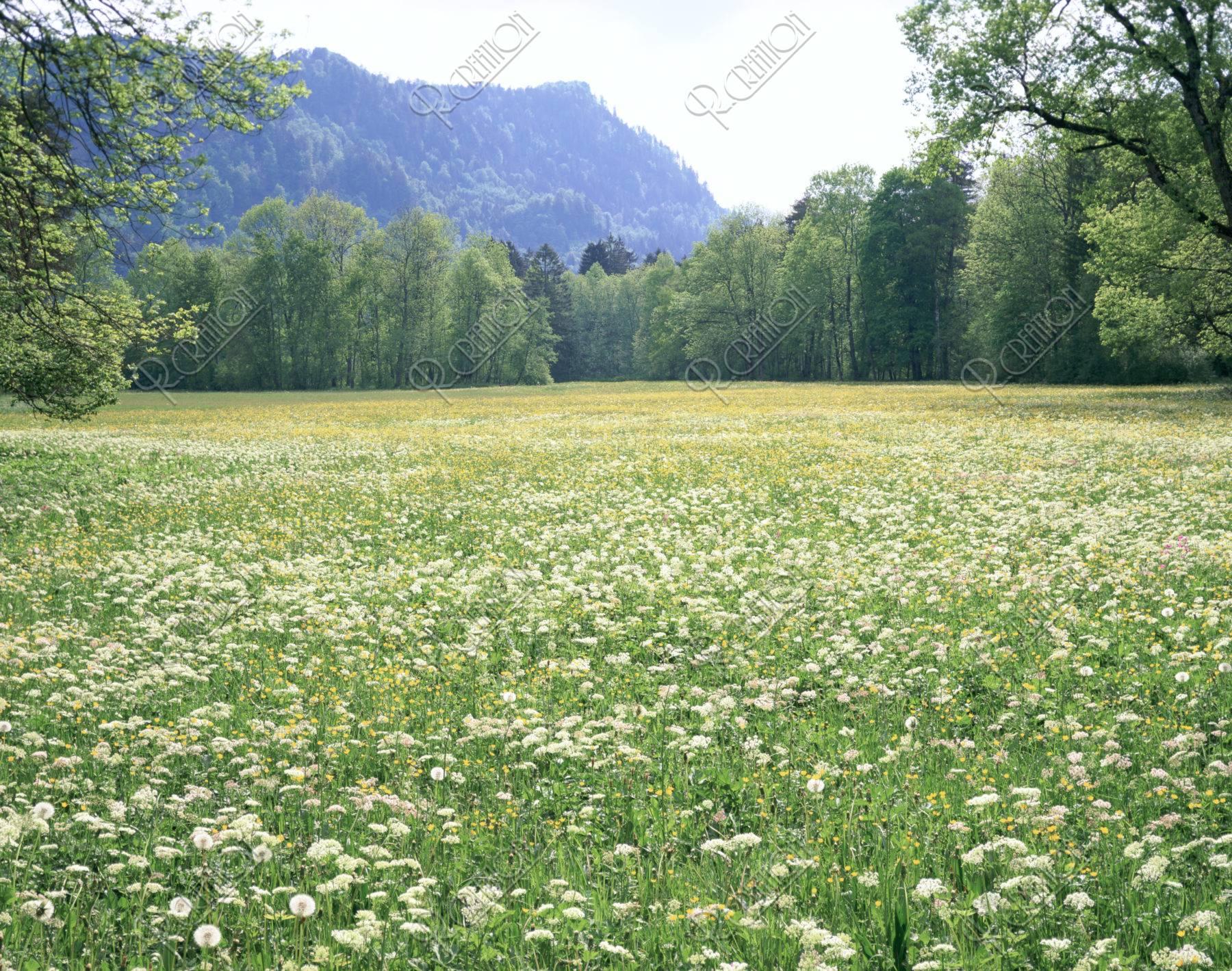 フッセンの花畑 ドイツ