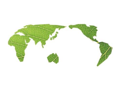 葉のレリーフ 世界地図