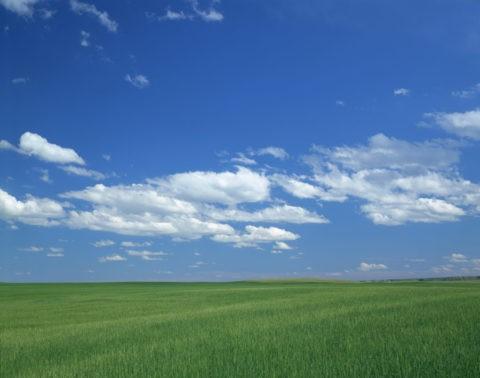 アメリカ 麦畑