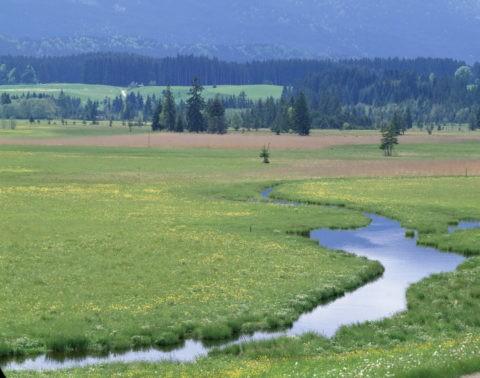 草原と小川 西ドイツ