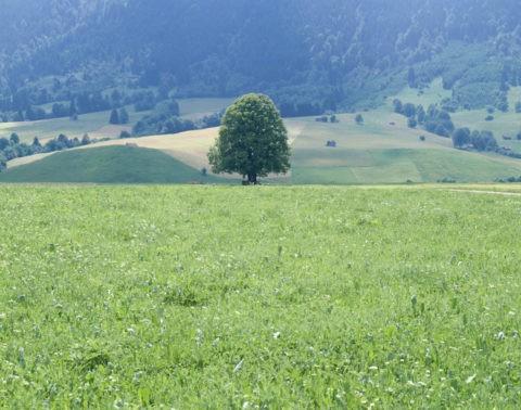樹 フュッセン付近 西ドイツ