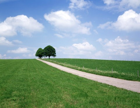 道と樹 フュッセン付近 ドイツ