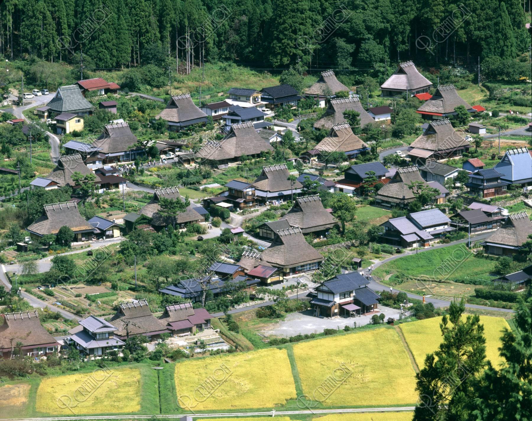稲田と茅葺き民家集落