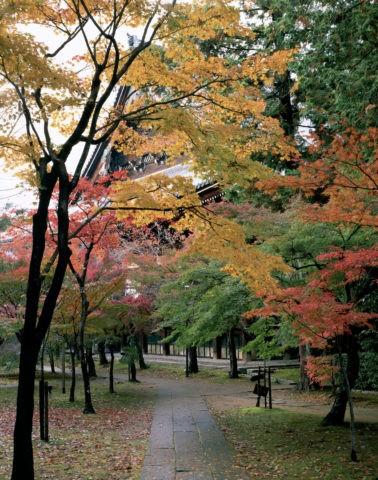 本堂 紅葉 並木 真如堂