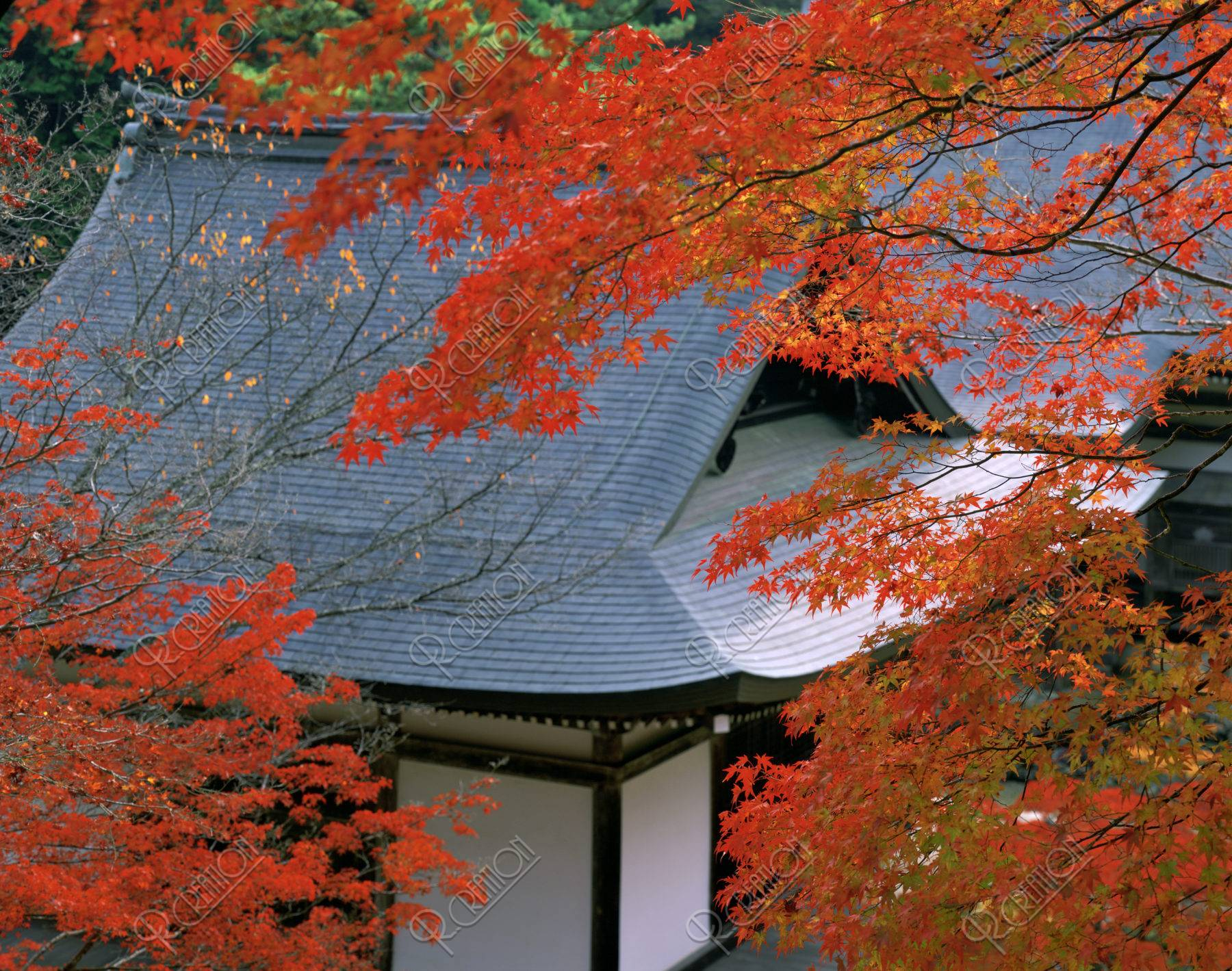 毘沙門堂 紅葉 神護寺