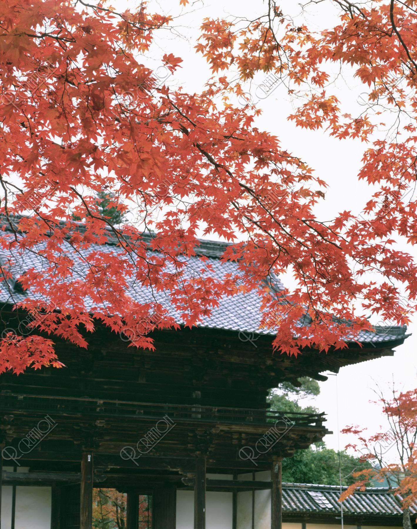 楼門 紅葉 神護寺