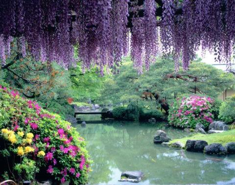 城南宮楽水苑の藤