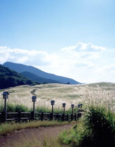 曽爾高原のススキと道