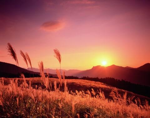 曽爾高原のススキと夕日