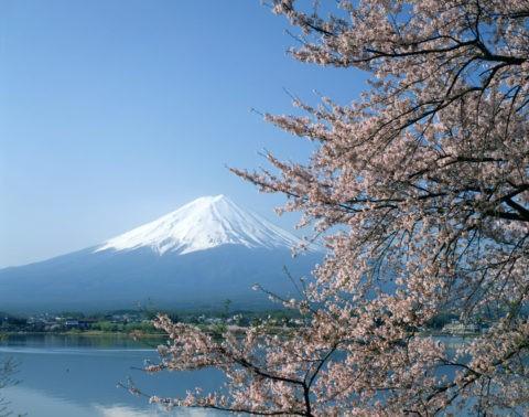 河口湖と富士山と桜