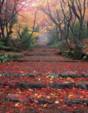 紅葉の鶏足寺参道