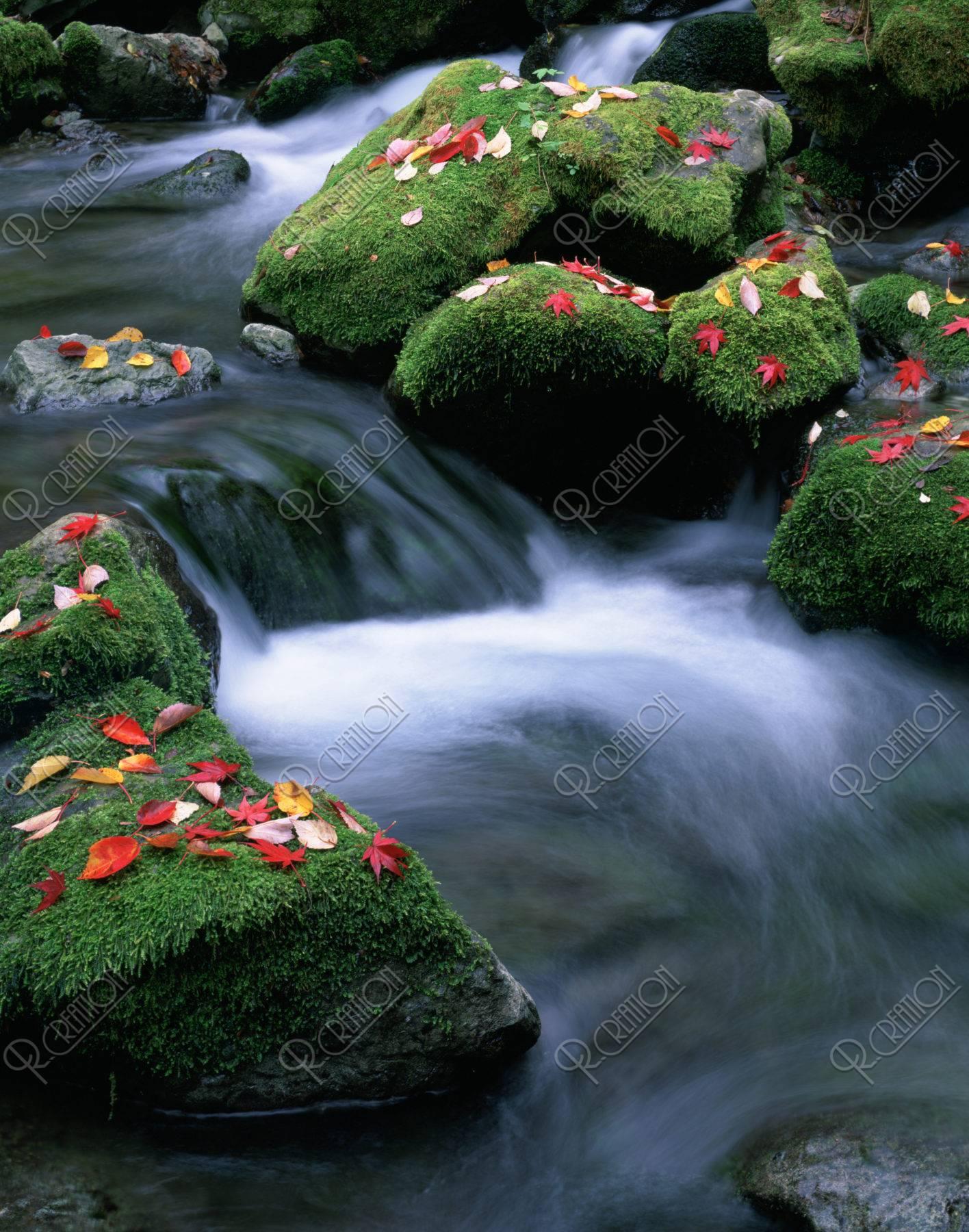 苔むす岩と紅葉