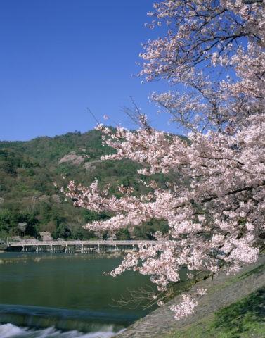 嵐山 渡月橋と桜