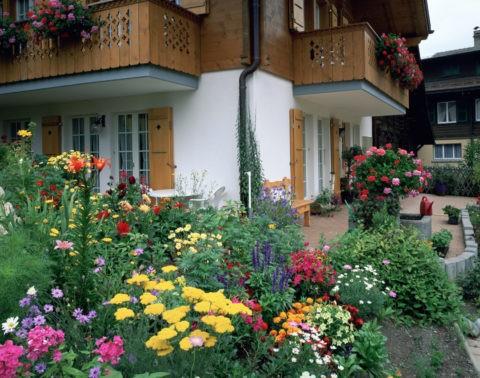 家の前の花壇