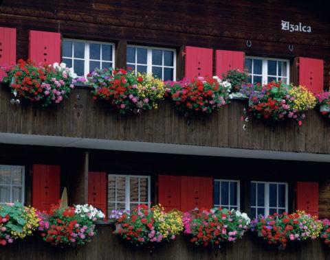 花飾りのある家
