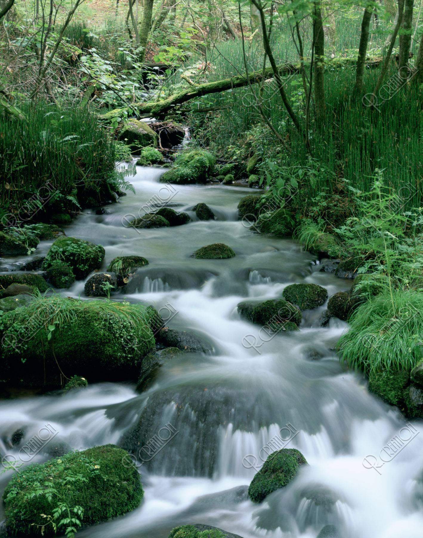 苔むす石と流れ