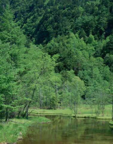 新緑の田代池 長野県