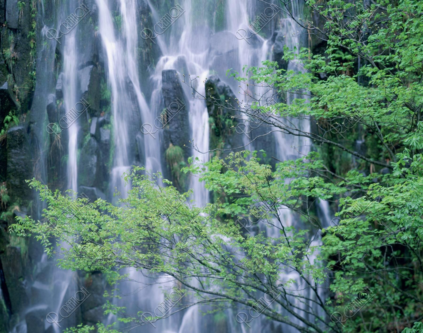 木島平 新緑の樽滝