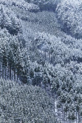 北山杉雪景色