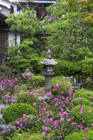 善峰寺 庭園