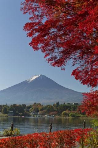 富士山 紅葉