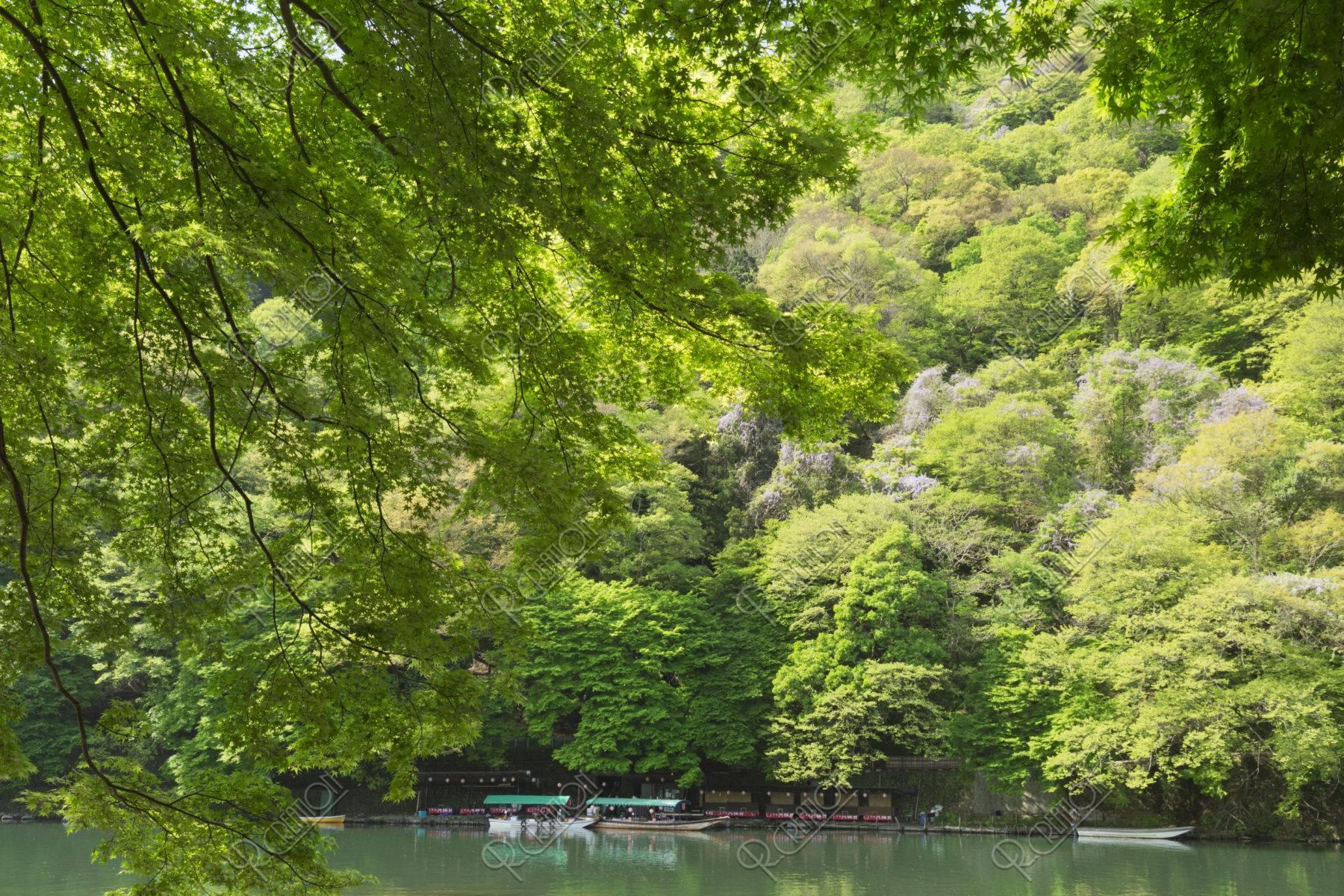 嵐山 新緑