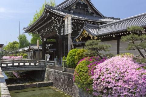 本願寺 ツツジ