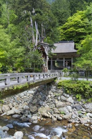 新緑の峰定寺