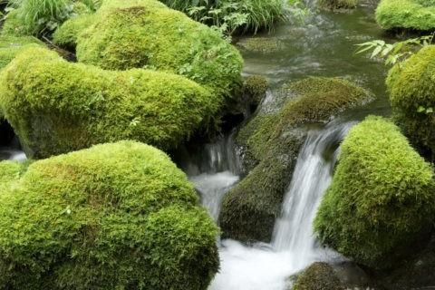 苔むす岩と流れ