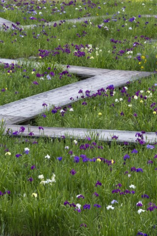 永沢寺 花しょうぶ園