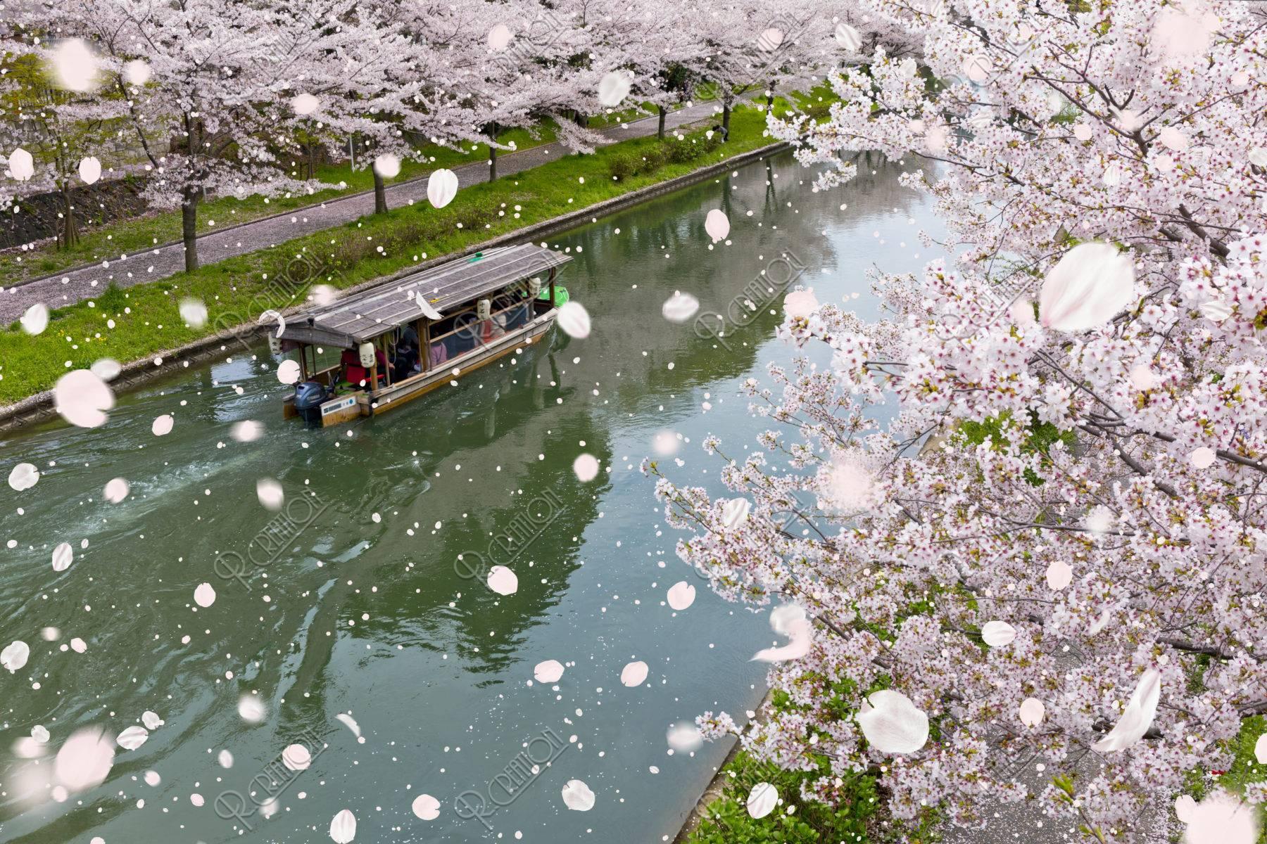伏見十石舟と桜吹雪