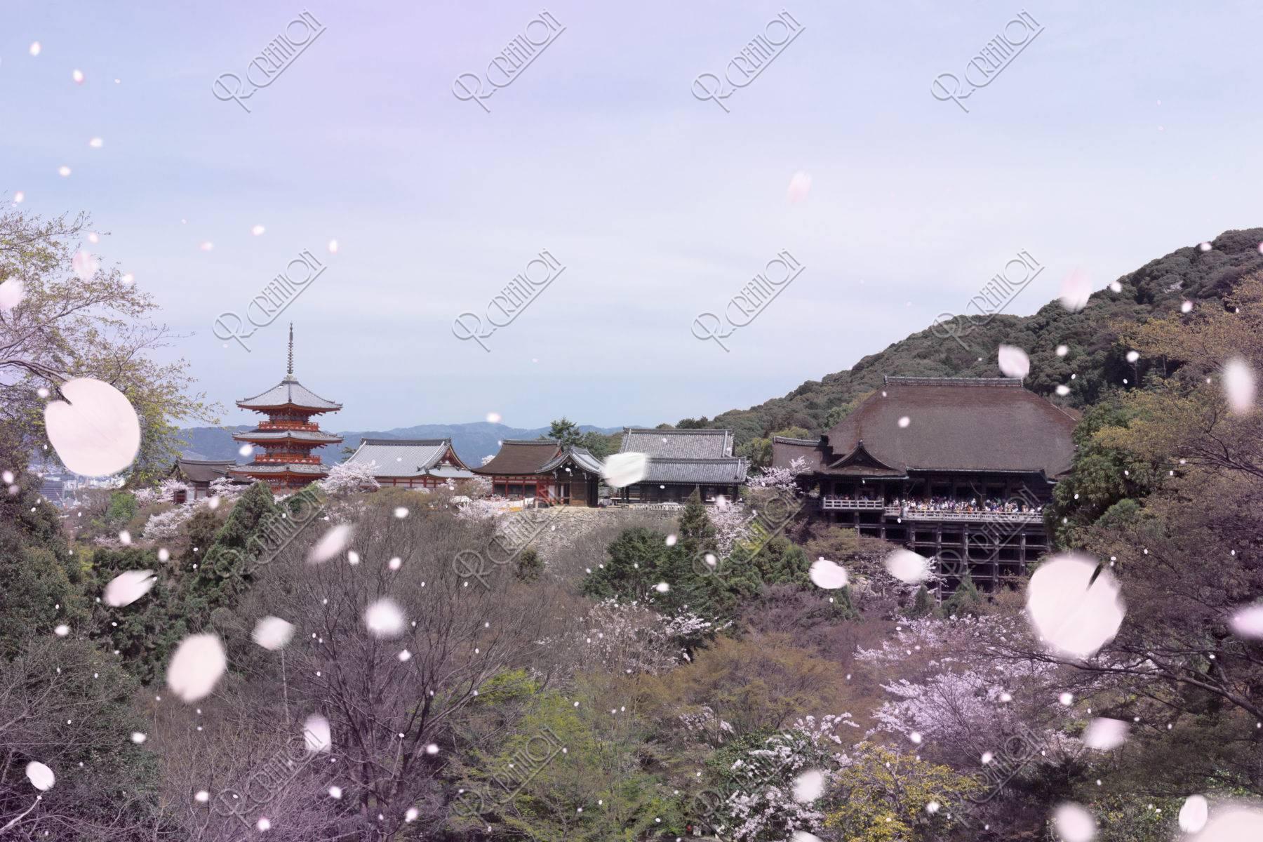 清水寺と桜吹雪