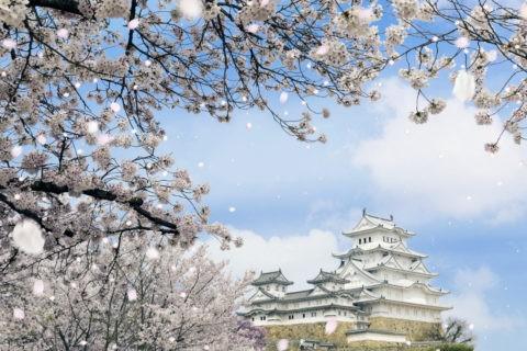 姫路城と桜吹雪